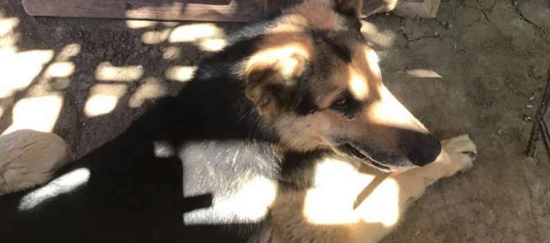 Cãozinho famoso por roubar empanada ganha cuidados e ração