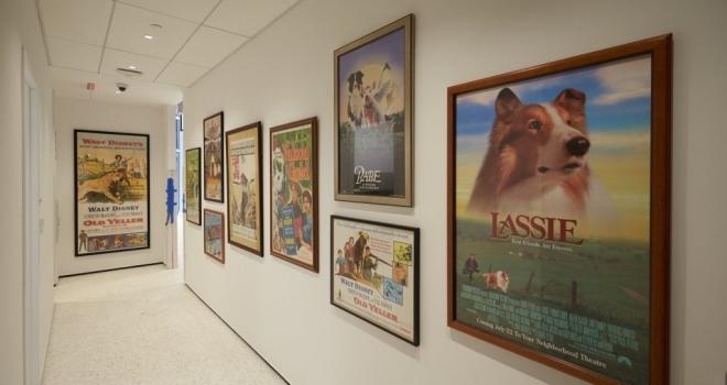 Museu dedicado a cachorros será aberto em fevereiro em Nova York