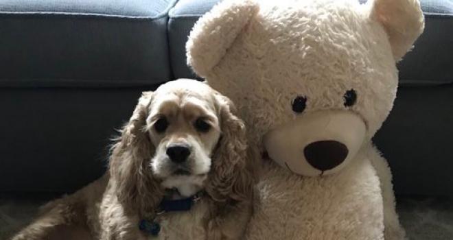 Cachorro e seu ursinho inseparável viralizam na web