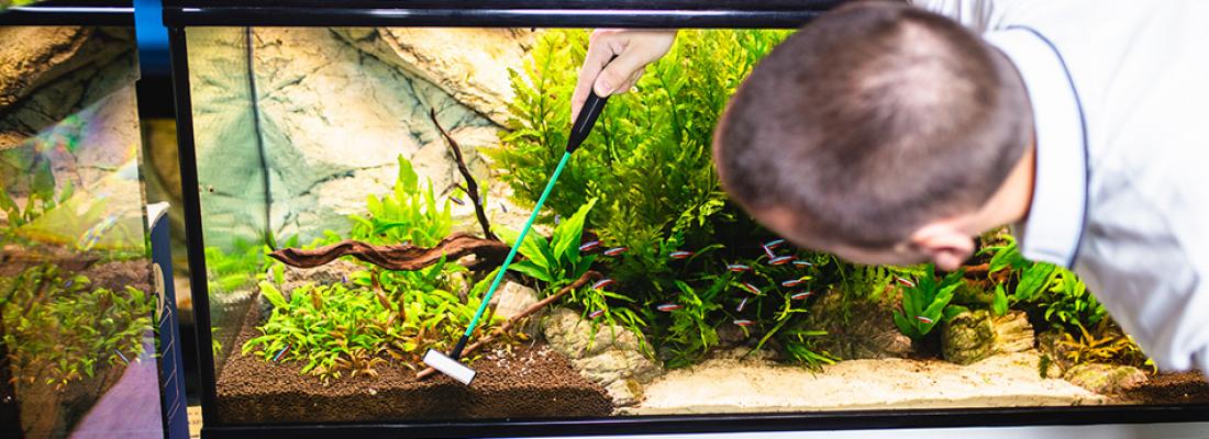 Limpeza do aquário previne seu peixe de doenças. Entenda