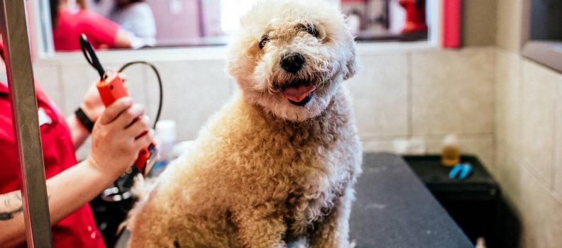 Por que tosar os cães no verão é fundamental