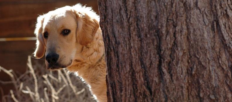 4 formas de deixar cães tímidos mais confiantes
