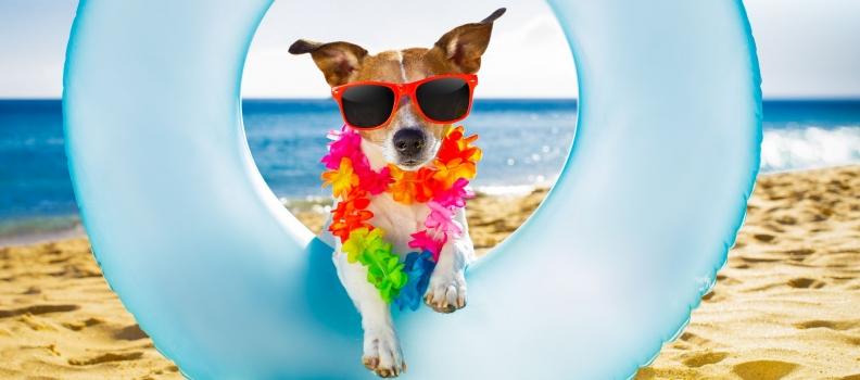 Onda de calor: 12 maneiras de manter o seu cão fresco neste Verão