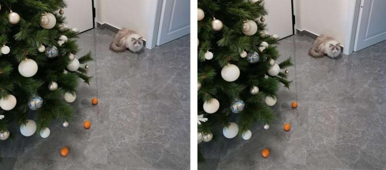 Medo de tangerinas impede gatinho de destruir árvore de Natal da família