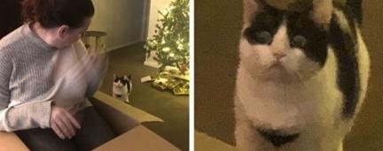 Gatinha fica chocada ao ver tutora sentar dentro de caixa