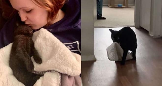 Gatinho insiste em levar seu cobertor de infância para onde for