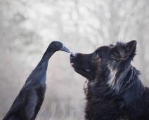 A inesperada amizade entre um Cão e um Pato