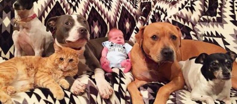 Animais de estimação ficam apaixonados pelo novo membro de sua família