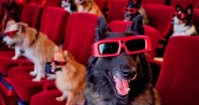 Cinema no Texas é pet friendly e oferece open bar para tutores