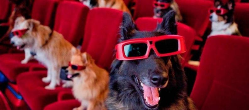 Cinema no Texas é pet friendly e oferece open bar para tutores