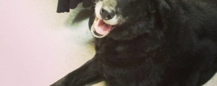 Após 10 anos desaparecido, Cão volta para a casa de sua família