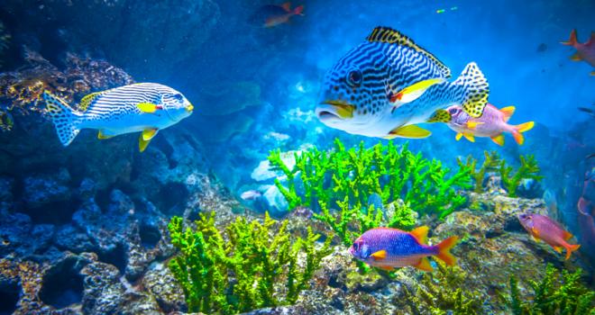 Dicas: Controle de algas em seu aquário