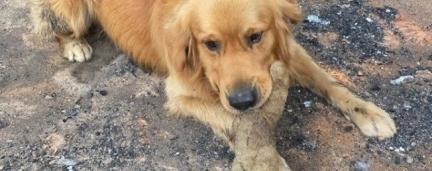Cãozinho reencontra brinquedo favorito após sua família perder tudo em incêndio