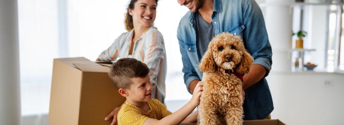 Dicas: Como ajudar seu cão a se ajustar a uma nova casa