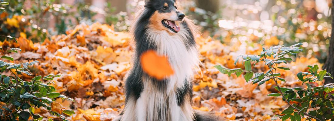 Chegada do Outono e saúde pet: atenção redobrada dos tutores