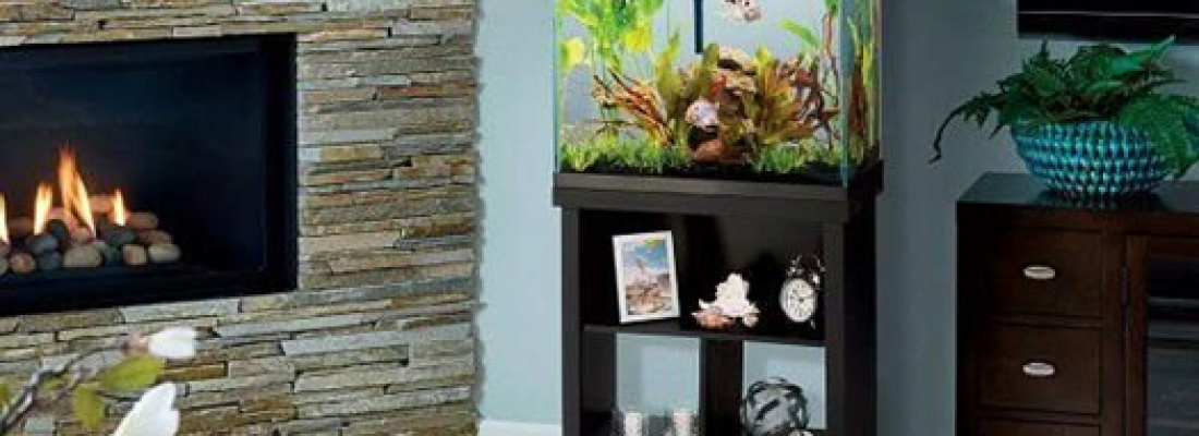 Dicas para ajudar a decidir onde colocar um aquário em sua casa