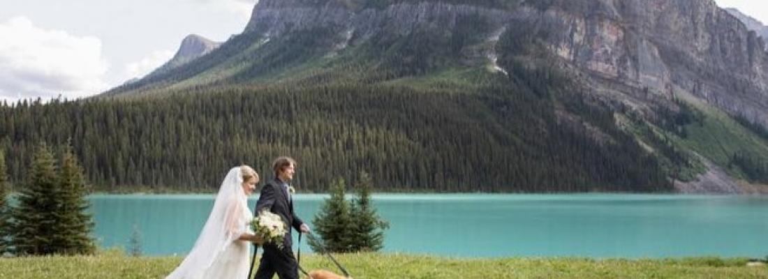 Noiva que teve seus cães no casamento e diz que foram as melhores damas de honra. Confira