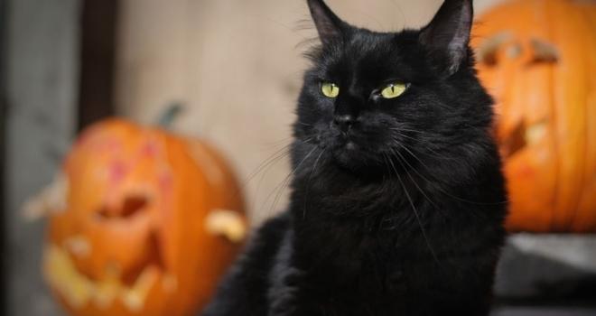 Gato Preto – Realmente dá azar?