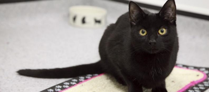 Gato-herói dá pista a policial e ajuda a capturar fugitivo