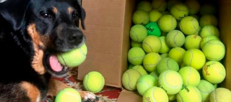 Fotos mostram a alegria de cachorro ao ganhar 100 bolinhas