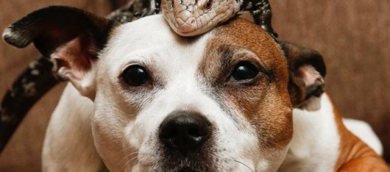 Cachorro resgatado vira melhor amigo de um lagarto na Inglaterra