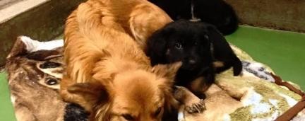 Cão foge do canil para acalmar 2 filhotes que estavam chorando