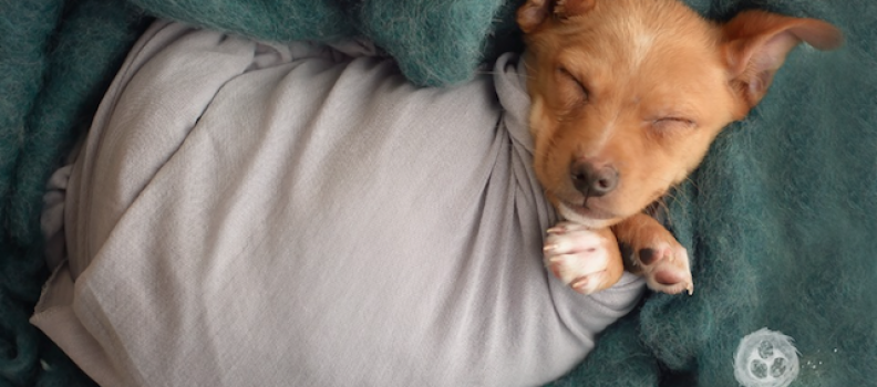 Recém-adotado: Cãozinho ganha ensaio fotográfico típico de de bebês recém-nascidos