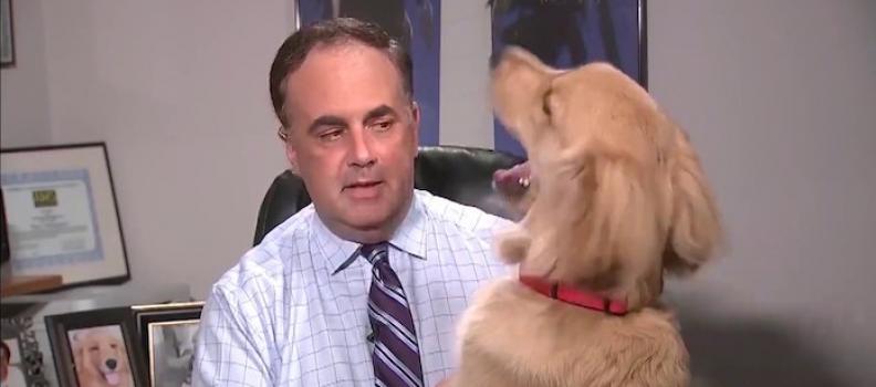 Cãozinho invade previsão do tempo em jornal e rouba a cena; veja