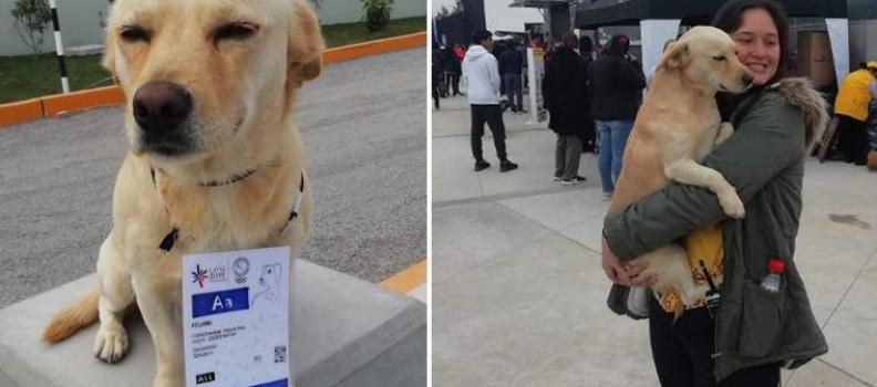 Cachorro com credencial vigia (e diverte!) surfistas no Pan-Americano