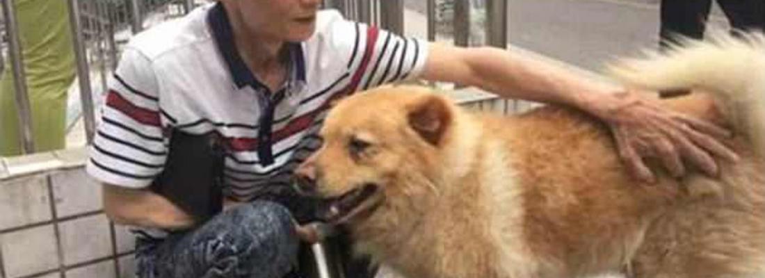 Cãozinho passa 12 horas na estação de trem todos os dias esperando seu tutor