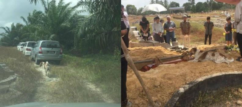 Cãozinho corre por 3 km para ir ao enterro da tutora na Malásia e fica ao lado da sepultura