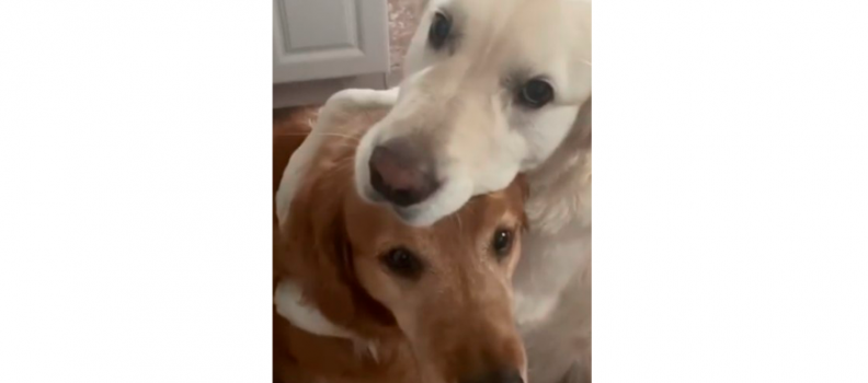 Peludinho abraça irmão em pedido de desculpas; vídeo é muito fofo