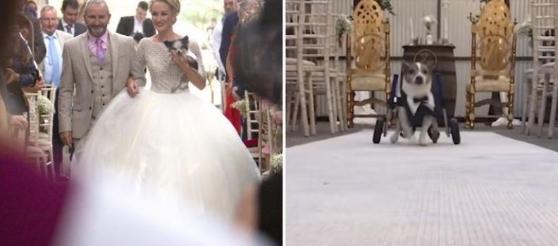 Noiva se casa na companhia dos 8 cãezinhos que resgatou