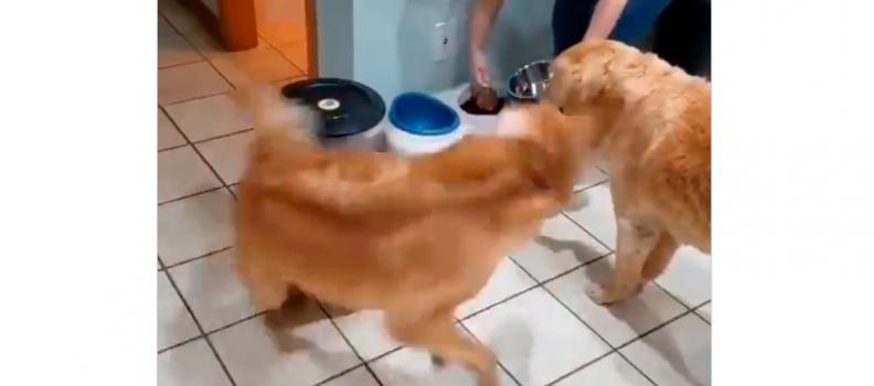 Felicidade desse cãozinho na hora da comida vai alegrar seu dia
