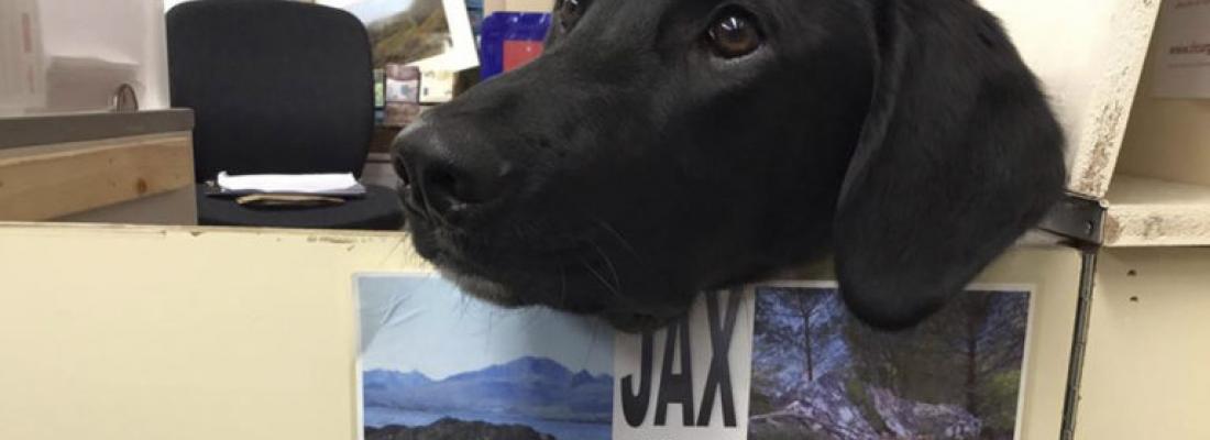 Cachorro trabalha nos Correios com uma função muito importante: lambedor oficial de selos!