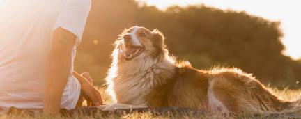 Estudo: Por que cachorros são tão sensíveis e sociáveis?