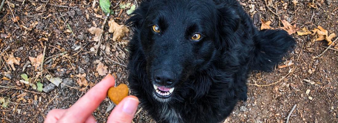 Petiscos: Aliado do reforço positivo para pets