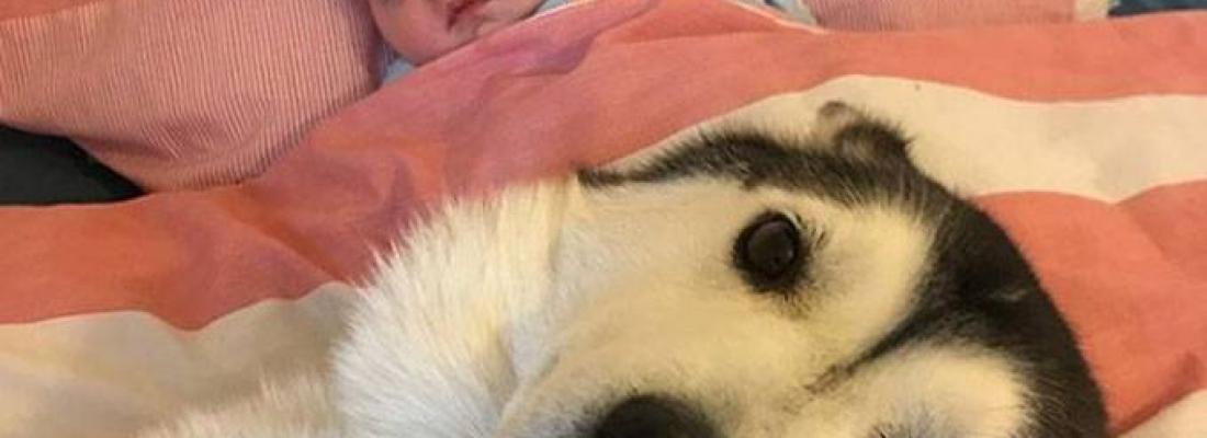 Amizade entre huskies e recém-nascido ganha a internet