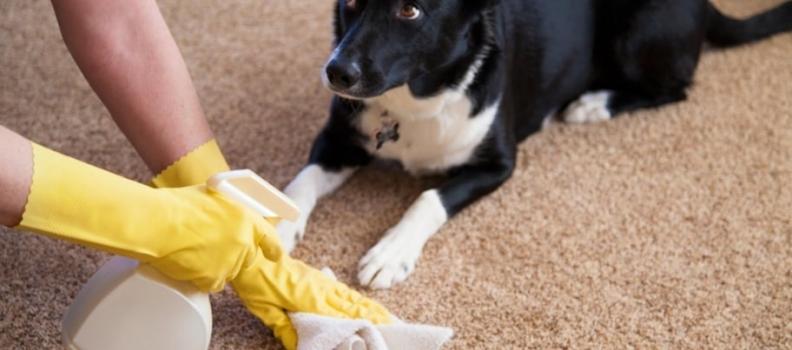 3 erros que tutores cometem na hora de ensinar o cachorro a fazer xixi no lugar certo