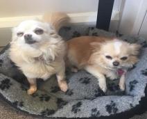 Pedido de aniversário de tutora se realiza e ela reencontra seus cãezinhos