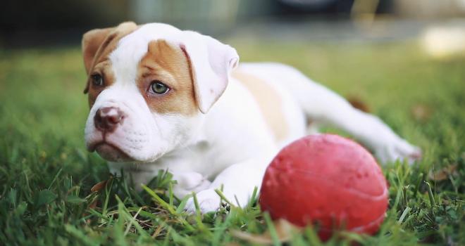 Atenção ao ❤ – 5 sinais de problema cardíaco nos cães