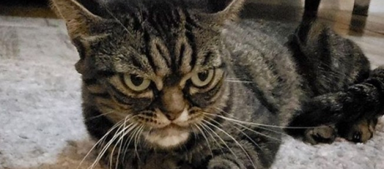 Conheça Kitzia, a Gatinha que parece estar sempre mal-humorada