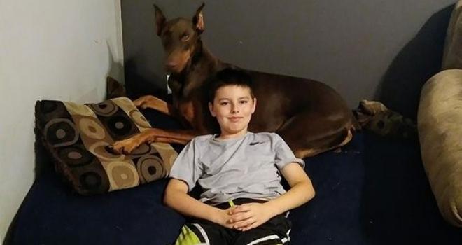 Menino vende brinquedos para pagar tratamento do cachorro da família