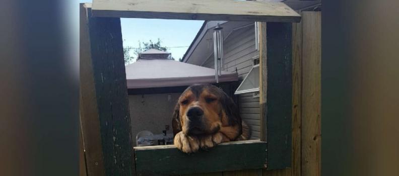 Vizinhos fazem janela para facilitar contato de cãozinho com moça que não pode ter pets em casa