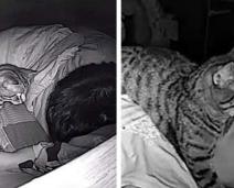 Rapaz monta câmera escondida para ver o que seu Gato faz enquanto ele dorme