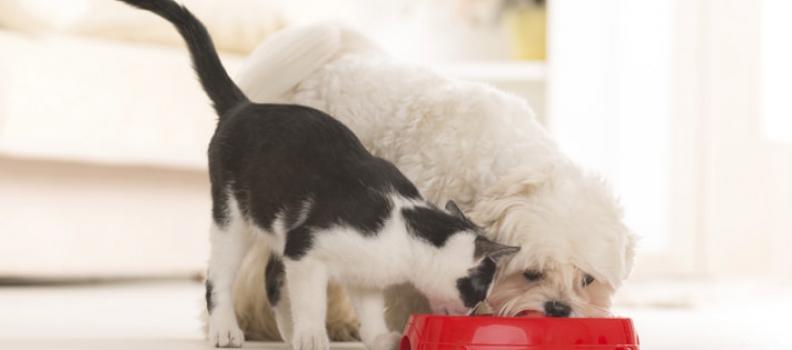 Dicas de alimentação para cães e gatos
