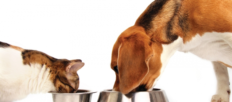 Como manter a higiene do comedouro e bebedouro do seu Pet