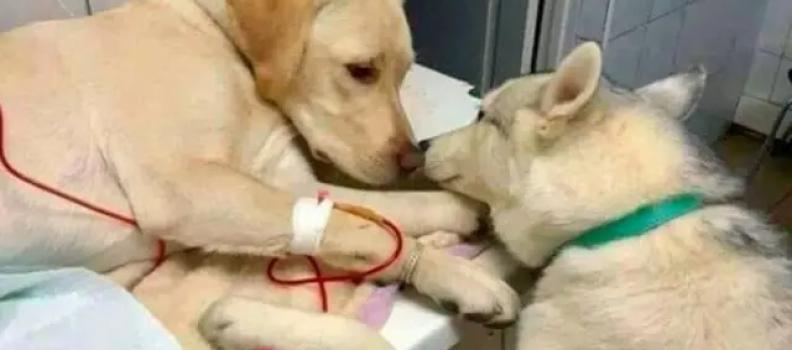 Cachorro dá apoio a paciente em clínica veterinária e foto viraliza