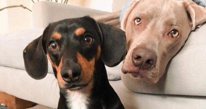 Cãozinho ganha um melhor amigo e consegue superar a ansiedade