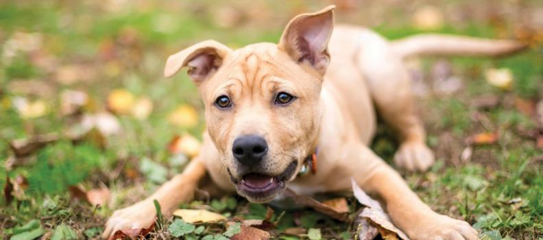 Estudo: curiosidades e características da inteligência canina